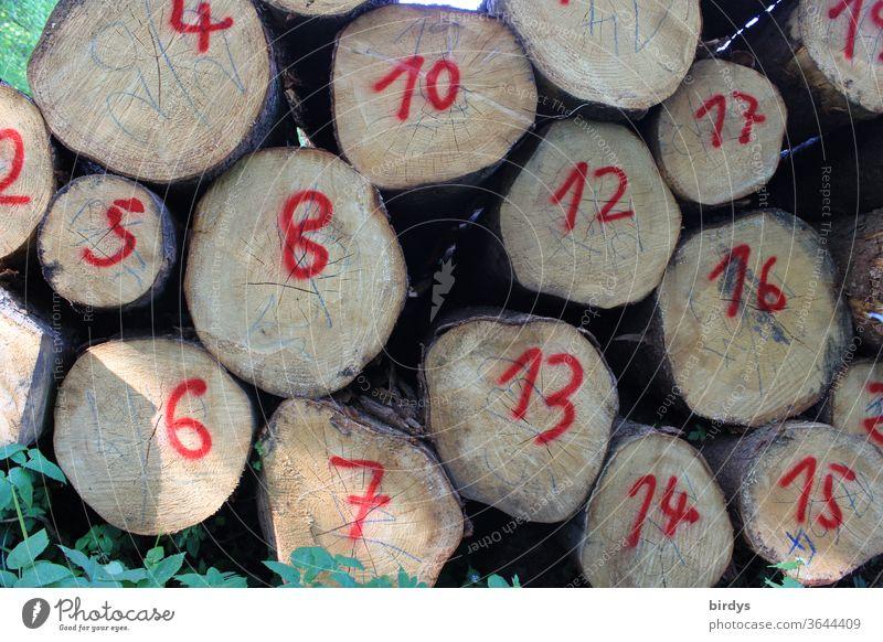 Zahlen auf gestapelten Baumstämmen. Nummerierte Baumstämme. rot Holz Forstwirtschaft Holzwirtschaft Zahlenfolge Hirnholz rote Zahlen Ziffern & Zahlen Tag