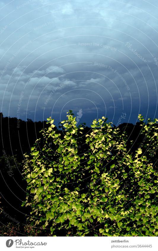 Haselnuss am Abend abend altocumulus drohend dunkel dämmerung düster farbspektrum feierabend froschperspektive gewitter haufenwolke himmel hintergrund klima