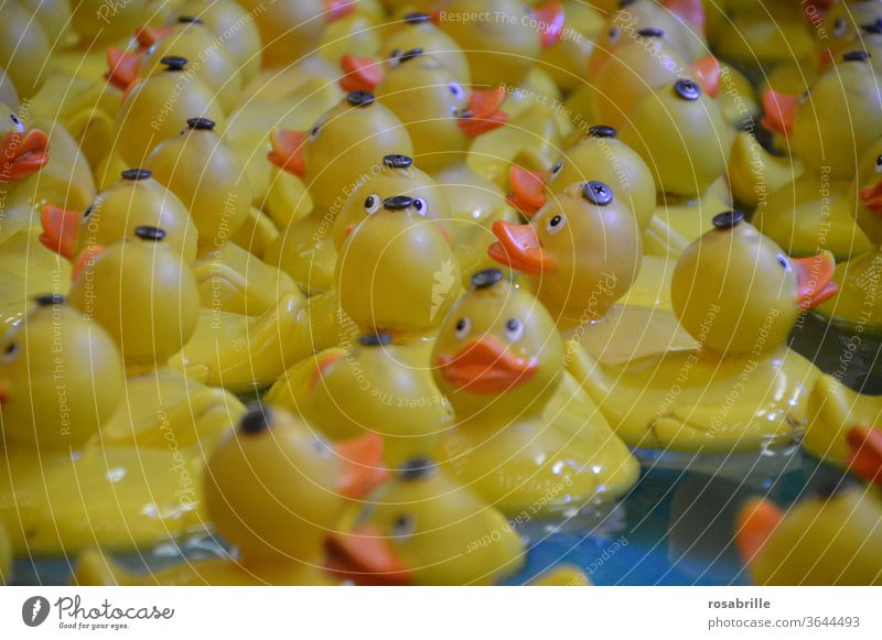 Quietscheenten | gefangen in Plastik Ente quietschen Badewanne Badeente baden Plastikente gelb Spielzeug spielen spielerisch angeln Preis Jahrmarkt