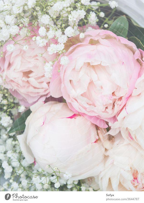 Wunderschöner Strauß weißer und rosa Pfingstrosen Hintergrund Blumenstrauß Hochzeit Haufen geblümt Sommer Natur Frühling Valentinstag romantisch Pflanze
