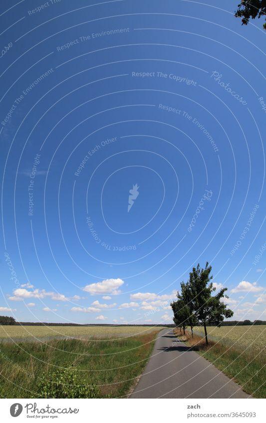 7 Tage durch Brandenburg - immer geradeaus Feld Ackerbau Landwirtschaft Gerste Gerstenfeld Getreide Getreidefeld Weizen Weizenfeld gelb blau Himmel Wolken