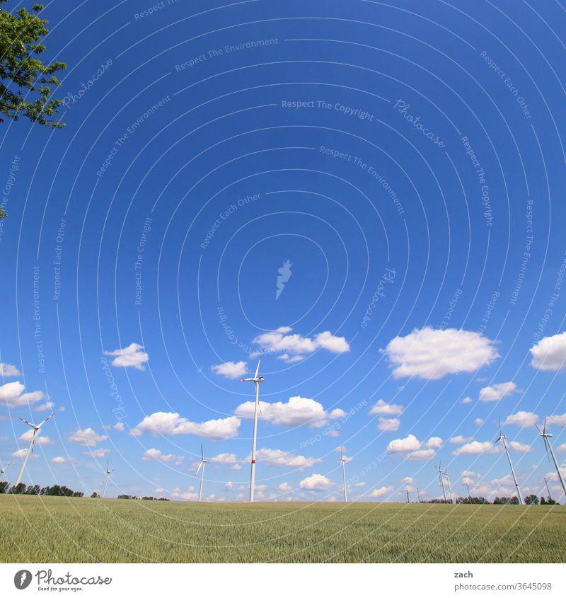 7 Tage durch Brandenburg - Ende Gelände Feld Ackerbau Landwirtschaft Gerste Gerstenfeld Getreide Getreidefeld Weizen Weizenfeld gelb blau Himmel Wolken Kornfeld