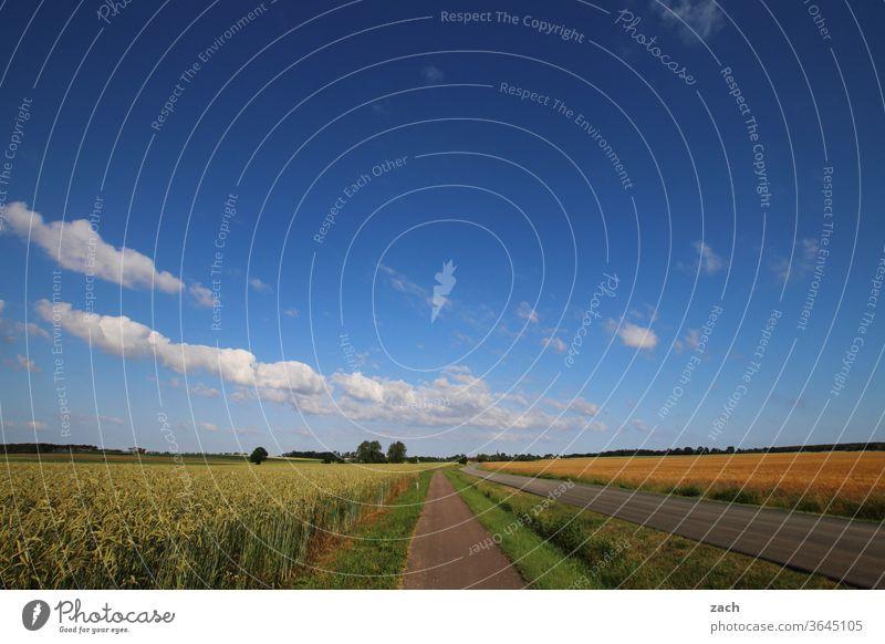 7 Tage durch Brandenburg - 10 Meter Feldweg Ackerbau Landwirtschaft Gerste Gerstenfeld Getreide Getreidefeld Weizen Weizenfeld gelb blau Himmel Wolken Kornfeld