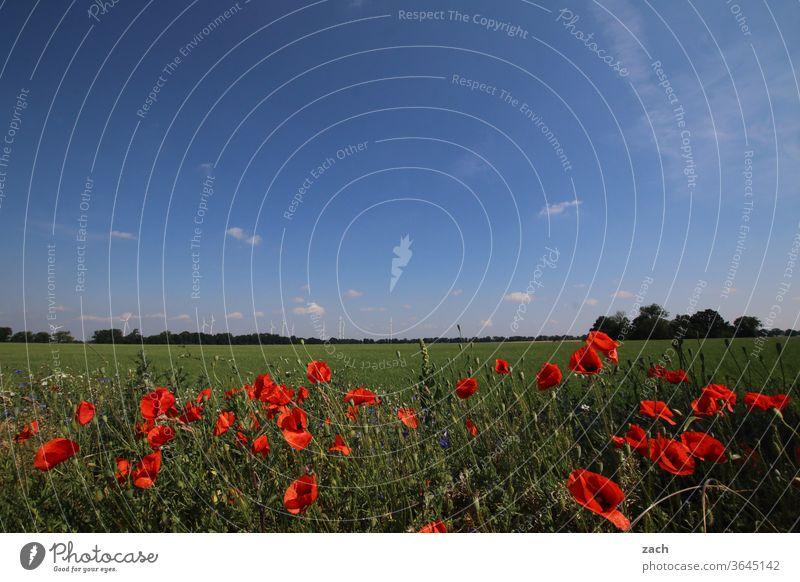 7 Tage durch Brandenburg - Manic Mohnday Feld Ackerbau Landwirtschaft Gerste Gerstenfeld Getreide Getreidefeld Weizen Weizenfeld gelb blau Himmel Wolken