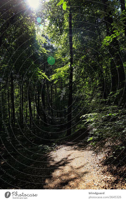 There is always a light in the dark (forest). Hänsel und Gretel hätten sich jedenfalls gefreut, in dem dunklen, unheimlichen Wald statt Brotkrumen eine Taschenlampe dabeigehabt zu haben.