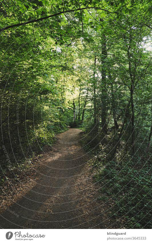 """""""Ich fürchte mich im Wald!"""" """"Ich auch, und ich muss nachher auch noch alleine zurück."""" Sommerlich grüner Waldweg mit  den langen Schatten der Bäume, hervorgerufen durch die tief stehende, untergehende Sonne."""