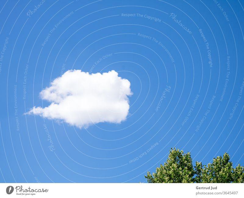 Eine weiße Wolke im blauen Sommerhimmel Himmel Minimalismus Wolken Natur Schönes Wetter Tag Außenaufnahme Menschenleer Farbfoto Umwelt Sonnenlicht Klima