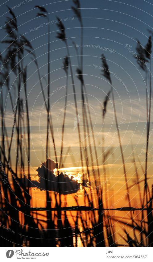 The Sunset Behind ... Natur Pflanze Wasser Himmel Wolken Sonne Sonnenaufgang Sonnenuntergang Gras orange schwarz Stimmung Warmherzigkeit ruhig Idylle Usedom