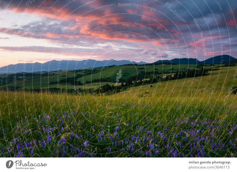 Ländliche Landschaft der Region Turiec in der Nordslowakei. Slowakische Republik ländlich Weiden Sommer Ackerbau Natur Hügellandschaft Wiese Blumen
