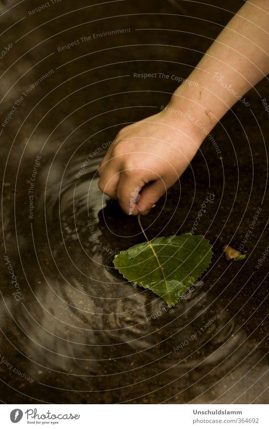 I took my leaf.... Hand Urelemente Wasser Sommer Regen Blatt Pfütze berühren entdecken festhalten Schwimmen & Baden natürlich braun grün Gefühle Stimmung ruhig