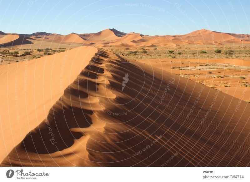 Spuren auf dem Dünenkamm Natur Landschaft Sand Wolkenloser Himmel Schönes Wetter Wüste Namib trocken Wärme blau braun gelb gold orange Warmherzigkeit ruhig