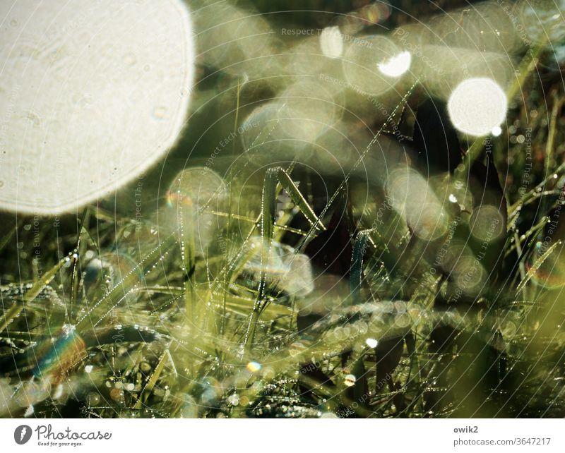 Gelichter Wassertropfen Frühling Schönes Wetter Gras Wiese leuchten glänzend klein Farbfoto flirren Halm schemenhaft nah Außenaufnahme Nahaufnahme