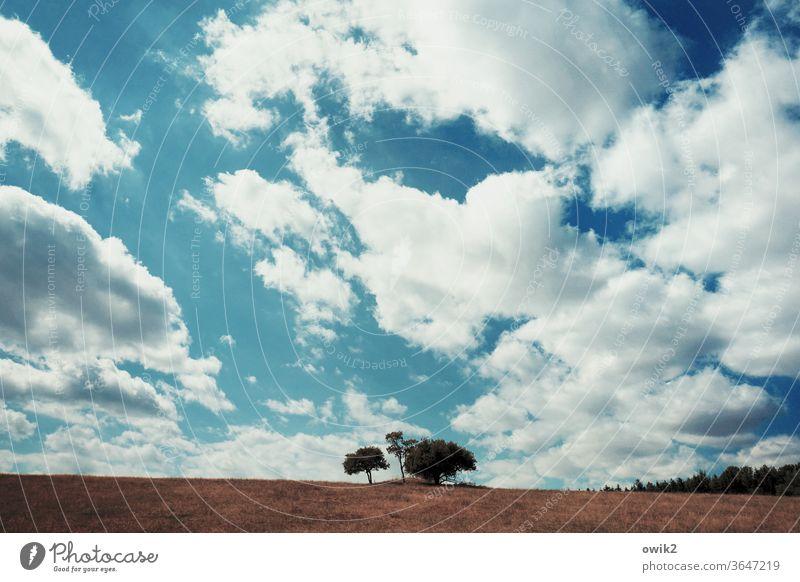 Baumgroup Baumgruppe Horizont Himmel Wolken einsam Acker Feld Wakdrand Landwirtschaft Natur Landschaft blau Ackerbau Sommer Außenaufnahme Farbfoto Wachstum