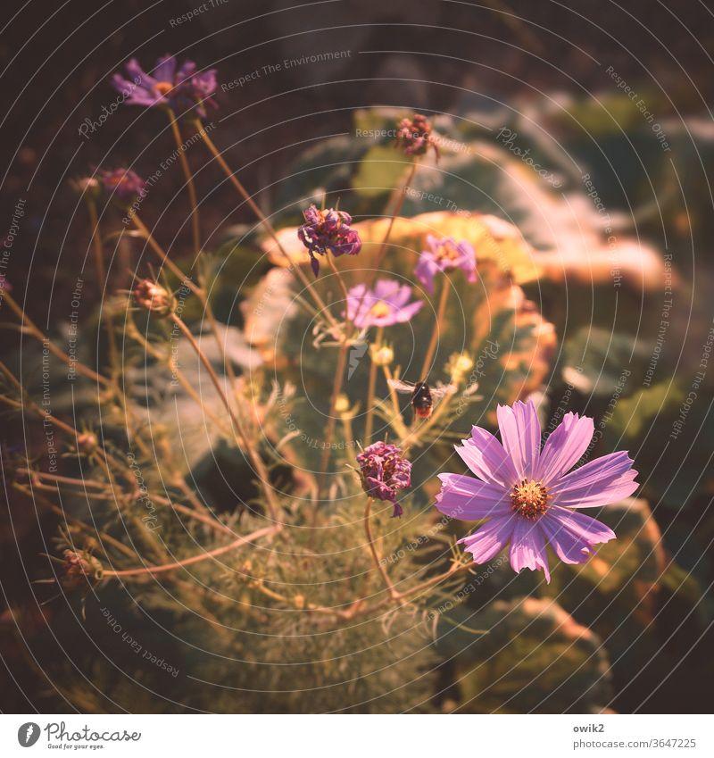 Durcheinander durcheinander viel Blumenwiese Wiese Garten geheimnisvoll Schatten duftend Licht Gegenlicht Sonnenlicht Umwelt Detailaufnahme Pflanze Natur
