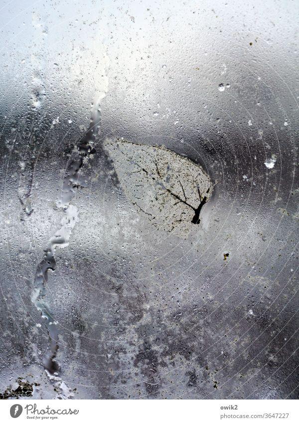 Verwittert Blatt Glasscheibe nass nah klein anhaften schemenhaft durchscheinend durchsichtig Herbstlaub kleben Vergänglichkeit Unschärfe Textfreiraum rechts