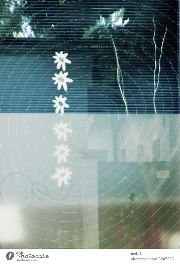 Tuchmacherstraße Schaufenster Reflexion & Spiegelung Dekoration & Verzierung blümchenmuster Jalousie Farbfoto Fenster Außenaufnahme Menschenleer Detailaufnahme