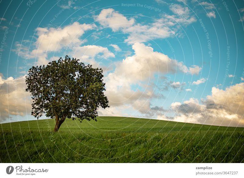 Baum auf saftiger grünen Wiese mit blauem Himmel und Wolken Natur feld Belgien Ardennen Zaun Wind Herbst Sommer Blätter Ackerland spatziergang windig natürlich