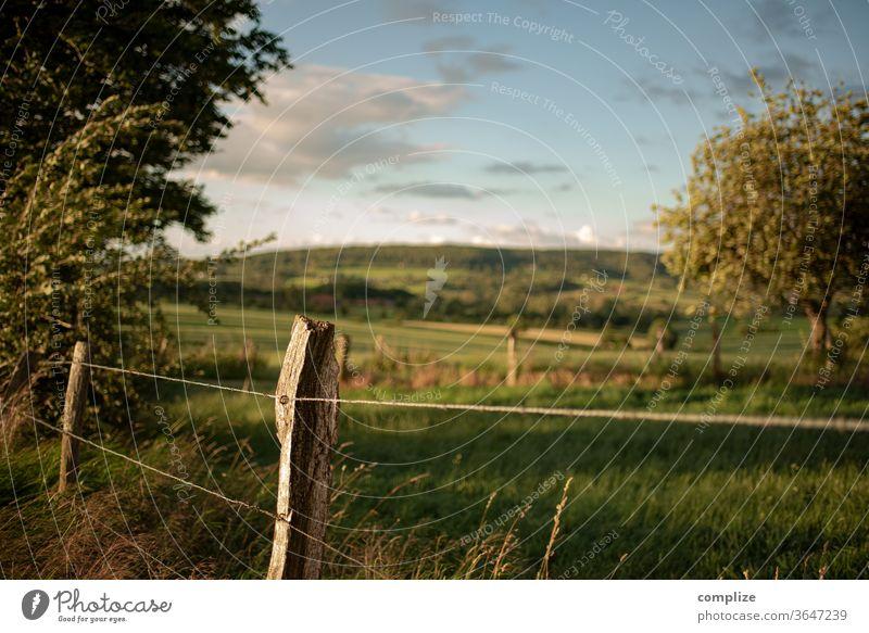 Wind, Weideland & Wiese Natur feld Baum Belgien Ardennen Zaun Herbst Sommer Blätter Ackerland spatziergang windig natürlich grün Hügel weite Stacheldraht