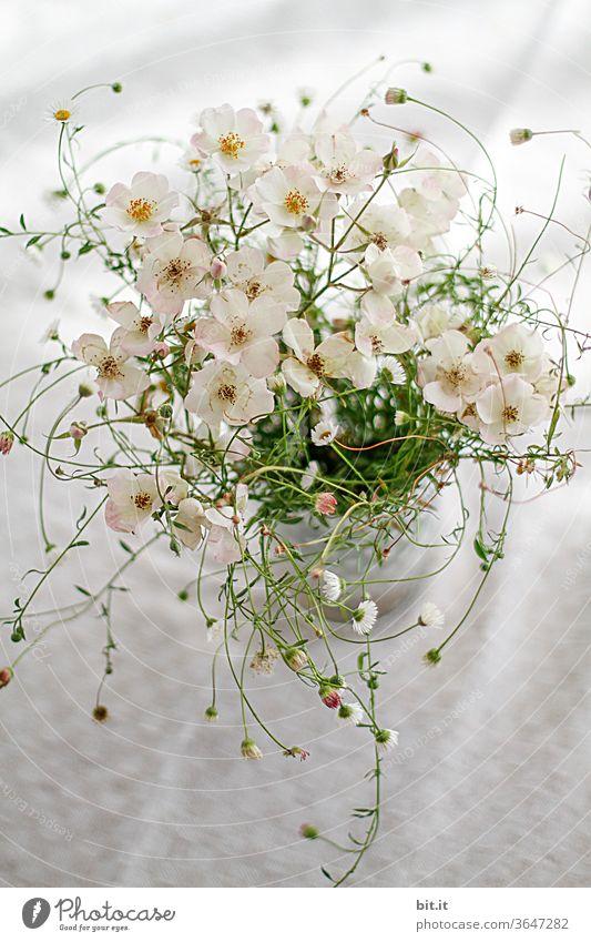 Wirbelblumen Blumenstrauß Blumenvase Blüte Blütenpflanze blühen Blühend blüht Pflanze Frühling schön Sommer rosa Dekoration & Verzierung weiß grün Tisch