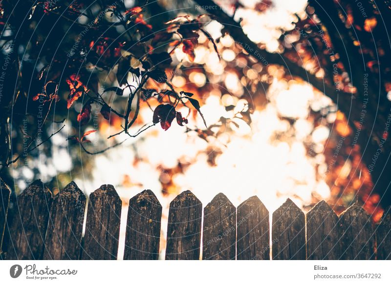 Ein Zaun im Gegenlicht mit Bäumen und der Sonne leuchten Natur Sonnenlicht Blätter Laub bunt warm Licht hell Garten Herbst verträumt idyllisch Gartenzaun Holz