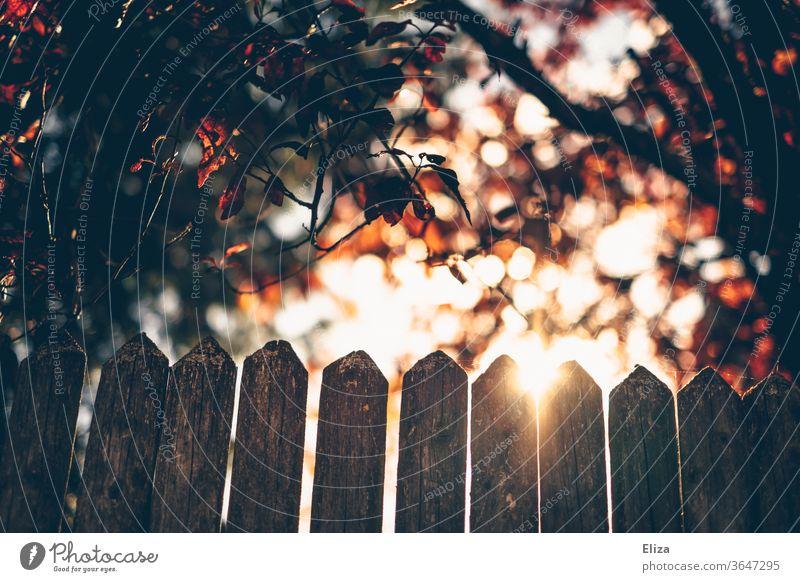 Ein Zaun im Gegenlicht mit Bäumen und der Sonne leuchten Natur Sonnenlicht Blätter Laub warm Licht hell Garten Herbst grün Sonnenstrahlen gutes Wetter