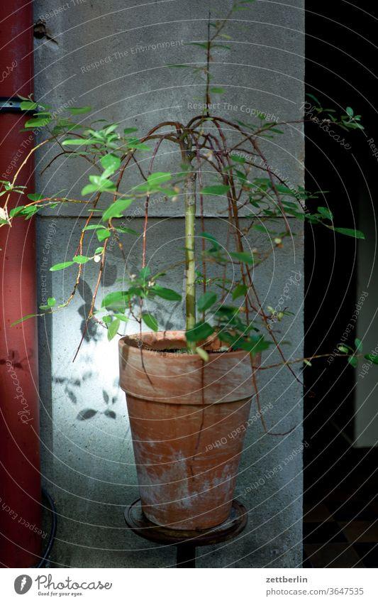 Blumentopf im Hinterhof altbau topfpflanze blumentopf lichtfleck sonnenfleck außen brandmauer fassade fenster haus hinterhaus hinterhof innenhof innenstadt