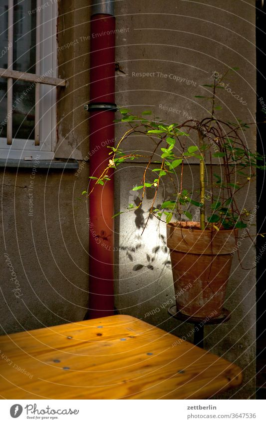 Blumentopf im Zwielicht altbau topfpflanze blumentopf lichtfleck sonnenfleck außen brandmauer fassade fenster haus hinterhaus hinterhof innenhof innenstadt
