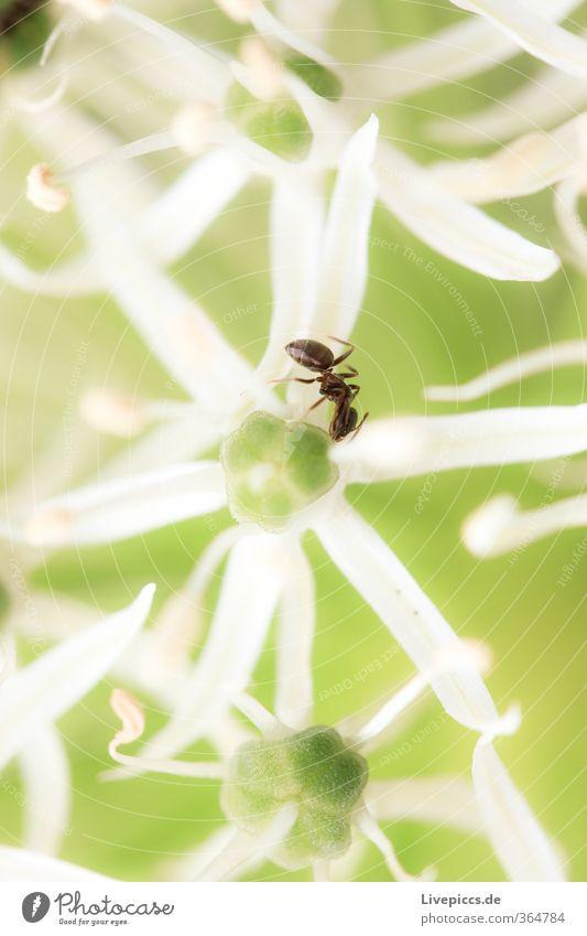 ...ich will da rein Natur grün schön weiß Pflanze Blume Tier Blatt Umwelt Frühling klein Blüte Garten natürlich hell Park