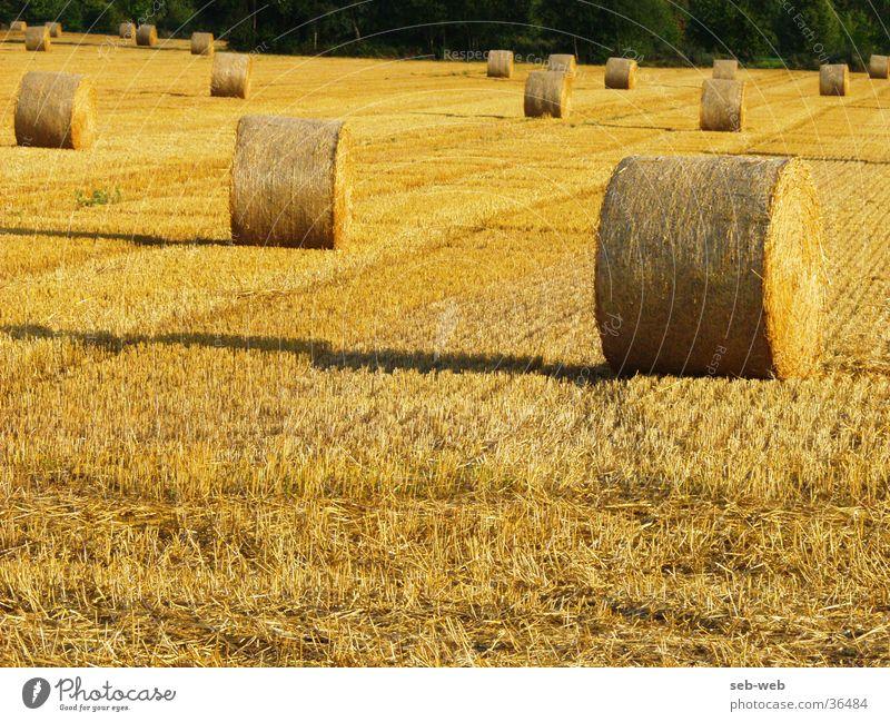 straw Feld Stroh Strohballen