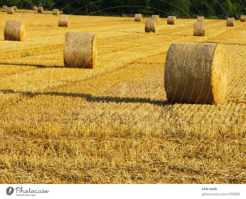 straw Stroh Feld Strohballen