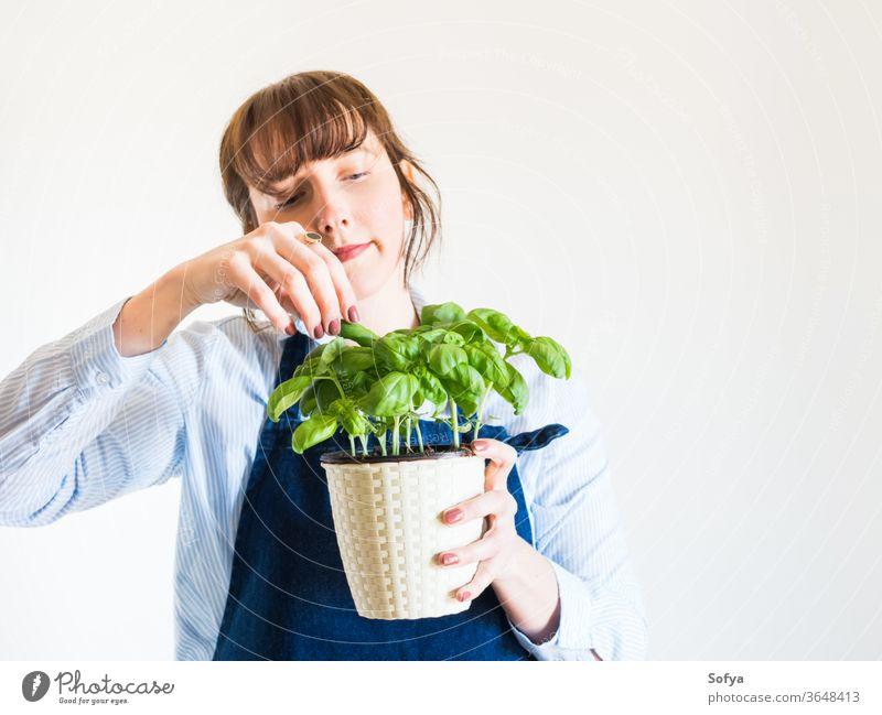 Junge Frau baut zu Hause frisches Basilikum an Gartenarbeit heimwärts Konzept grün Topf Pflanze Kraut Beteiligung Hand Hobby aromatisch Hintergrund Lebensmittel