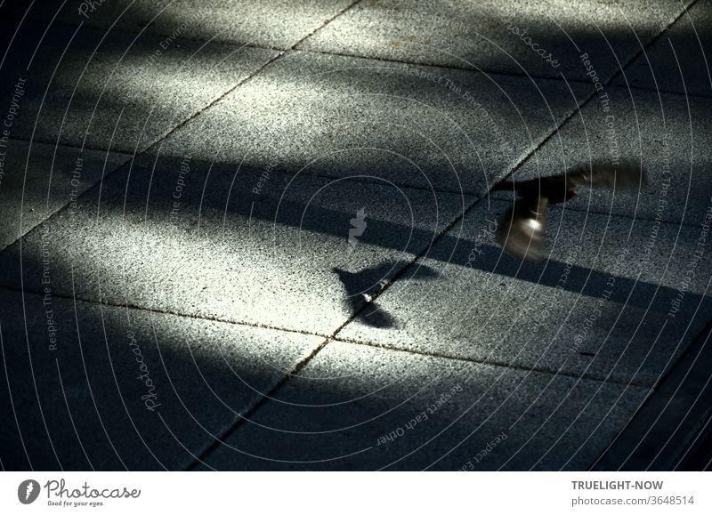 Wisch - - - und weg! Ein schnell wegfliegender Spatz zwischen Sonnenlicht und Schatten auf großen, grauen Platten Sperling huschen davon Licht Steinplatten