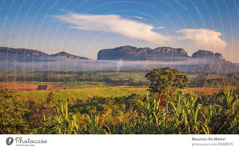 Felder, Bauernhöfe und Mogotes im Vinales-Tal, Kuba Ackerbau Karibik Kubaner Entf Ausflugsziel berühmt grün Landschaft Berge u. Gebirge Natur Handfläche