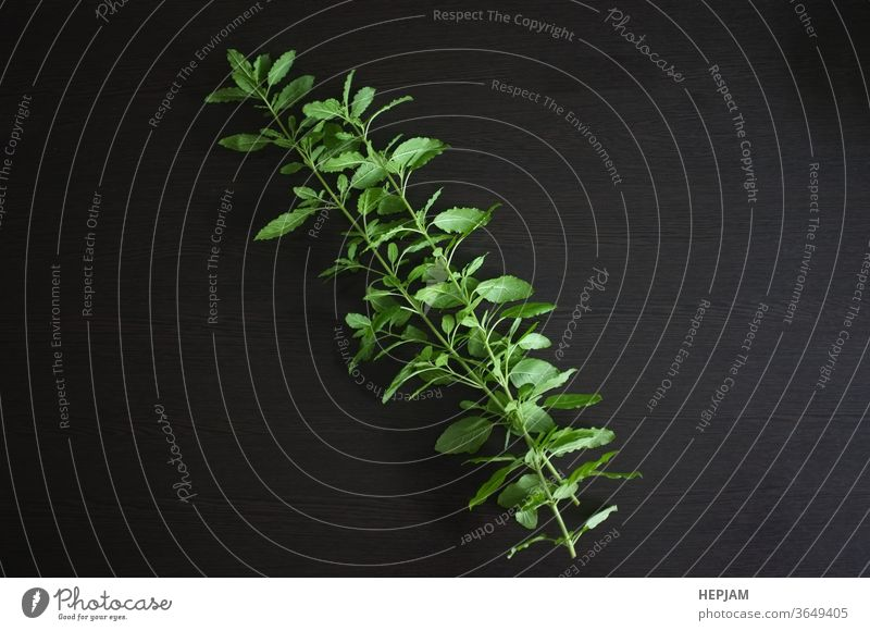 Heiliges Basilikum auf schwarzem Hintergrund. aromatisch Blüte Koch Essen zubereiten Küche kulinarisch Geschmack Flora Blume Lebensmittel frisch Frische grün