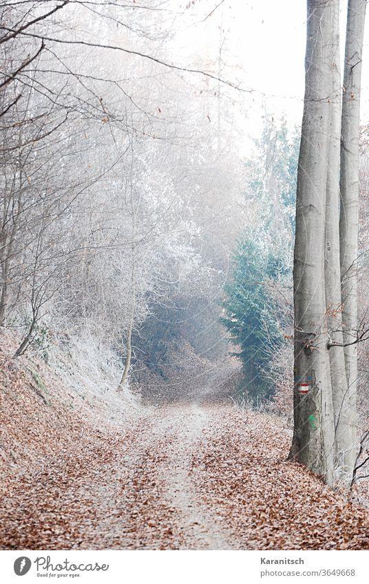 Ein stimmungsvoller Winterwald, mit Raureif bedeckt. Kälte Frost frostig kalt gefrieren gefroren winterlich Wald Bäume Zweige Weg Schnee geheimnisvoll