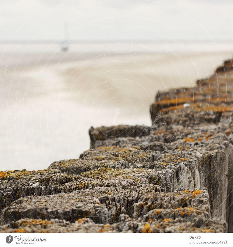 Trockengefallen I Natur Ferien & Urlaub & Reisen blau alt weiß Meer Landschaft ruhig Strand schwarz Wand Küste Mauer Holz grau Sand