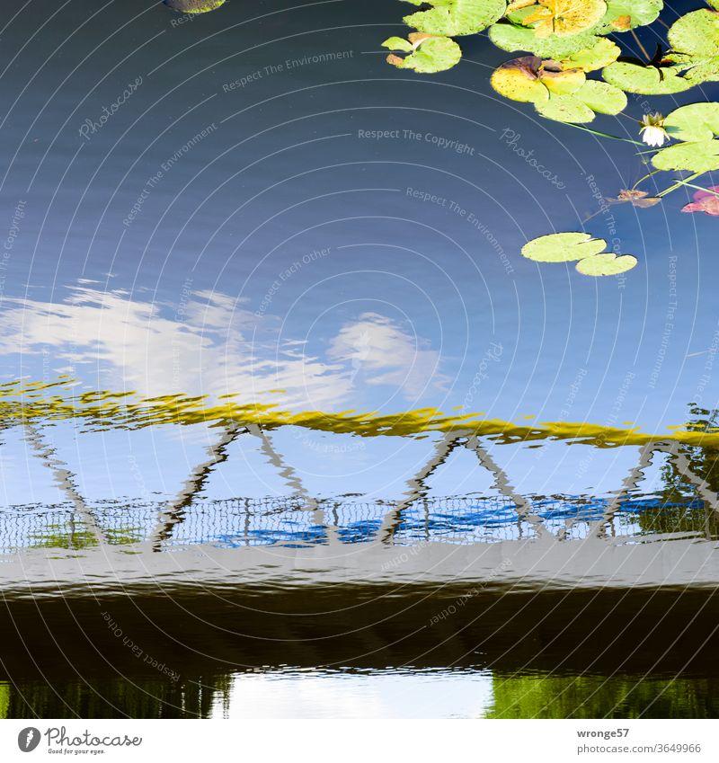 Spiegelbild der Schwaaner Brücke über die Warnow mit ein paar Seerosenblättern Spiegelung Reflexion & Spiegelung Wasser Farbfoto Außenaufnahme Menschenleer