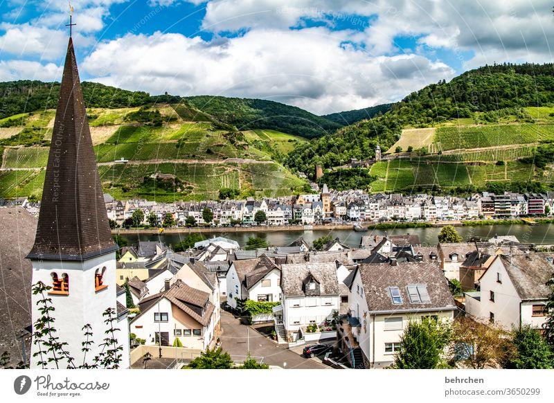 zell an der mosel Moselsteig Stadt Hunsrück Moseltal Weinbau Sonnenlicht Ruhe Weinstock Idylle Flussufer Rheinland-Pfalz Mosel (Weinbaugebiet) Landschaft