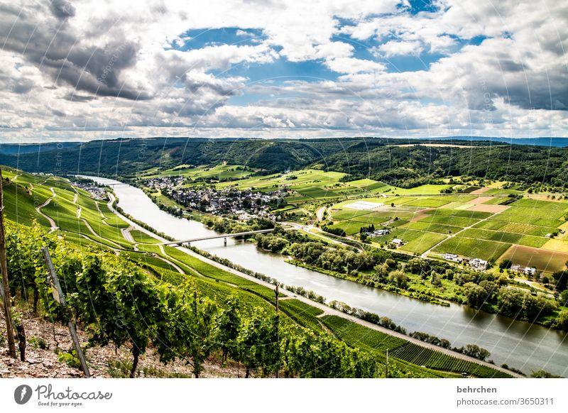 verzauberndes moselweinland...für truelight Moselsteig Stadt Hunsrück Moseltal Weinbau Rheinland-Pfalz Fluss Idylle Ruhe Sonnenlicht Mosel (Weinbaugebiet)