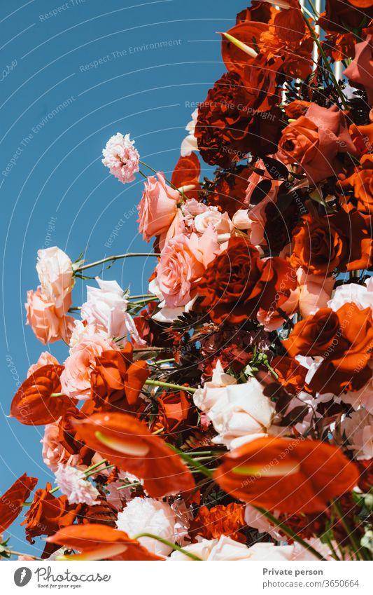 frische Blumen vor blauem Himmel weiß Botanik Frühling Saison rot Schönheit Schönheit in der Natur Nahaufnahme Landschaft Blütenblatt Sommer Blatt Roséwein
