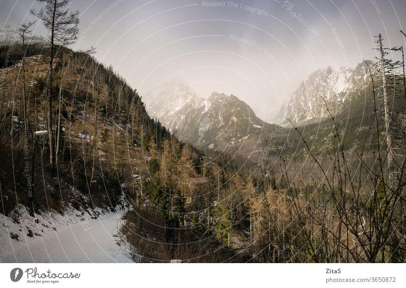Hohe Tatra Berge Slowakische Republik Natur Schnee Winter Bäume national Park wild Wildnis im Freien Saison kalt Gipfel weiß Europa reisen