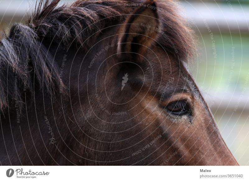 Nahaufnahme eines Pferdekopfes Kopf Tier Auge Bauernhof Porträt Säugetier Mähne braun Natur schwarz schließen Mund Reiterin Fell Nase Haustier schön Behaarung