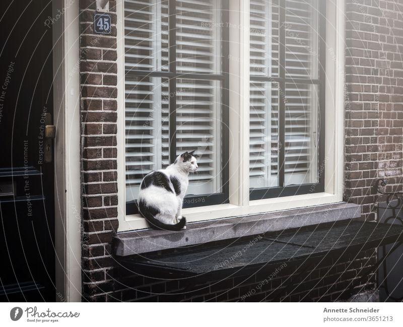 Katze schwarz weiß sitzend auf Fensterbank fenster Tier Menschenleer Haustier Tierporträt Außenaufnahme Straßenkatze freilebend Herumtreiben beobachten