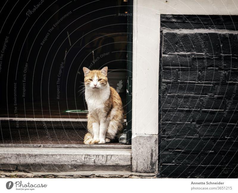 Rote Katze sitzend in Türöffnung Straßenkatze rote Katze Außenaufnahme freilebend Herumtreiben Tierporträt beobachten Blick