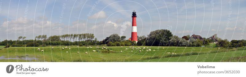 Leuchtturm auf Pellworm pellworm insel nordsee schleswig-holstein schaf schafe panorama architektur landschaft wiesen bäume himmel nordseeinsel