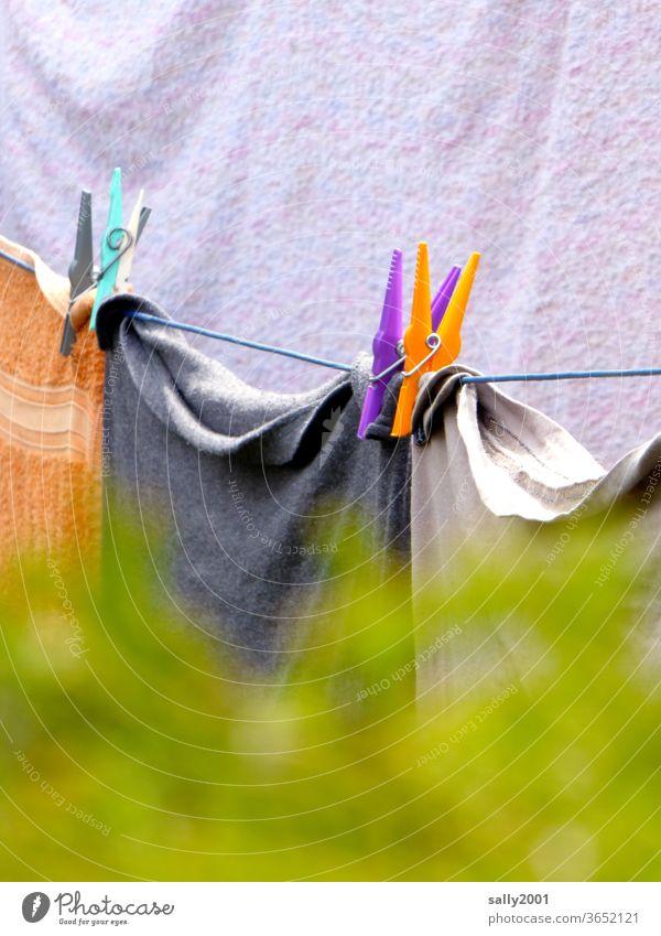 Waschtag in Nachbars Garten... Wäsche Wäscheklammer Wäscheleine aufhängen Handtuch Leine Hecke hinter der Hecke drüberschauen bunt waschen trocknen Haushalt