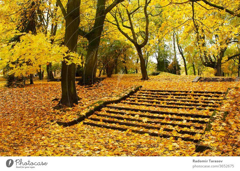 Herbstliches Stadtbild gelb Natur Fahrspur Park Baum Landschaft Saison Straße Sonnenlicht Laubwerk fallen im Freien Oktober orange Wald grün golden Tag