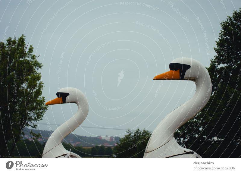 Zwei Holz- Schwäne warten auf Touristen . Mit Blick nach links. Tier Außenaufnahme Vogel Menschenleer Farbfoto Feder weiß Wasser Natur Schnabel schön elegant