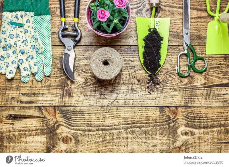Komposition mit Blumen und Gartengeräten Boden grün Sommer Frühling Wachstum Natur Gartenarbeit Bewässerung Blumentopf Haus im Freien Pflanze geblümt Topf