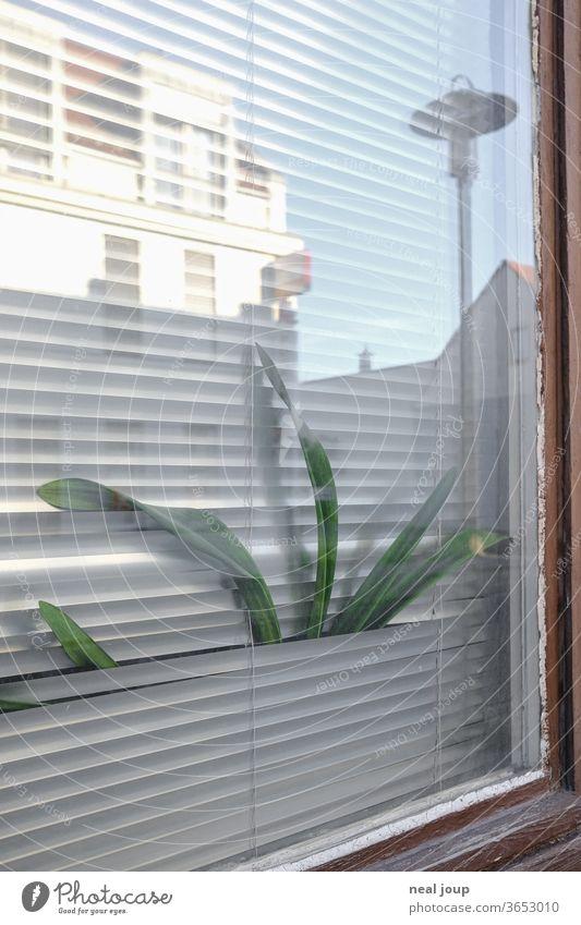 Zimmerpflanze quetscht sich durch Jalousie Fenster Freiheit Gefangenschaft Häusliches Leben Langeweile Ausblick Nachbarschaft Kontrast spießig Alltag trist
